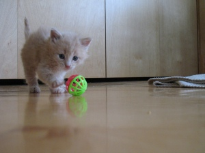 kitten by flickr user plizzba