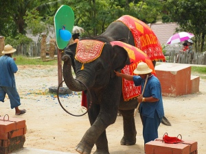 elephant by flickr user coolinsights